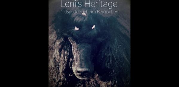 Leni's Heritage, Großpudelzucht im Bergischen