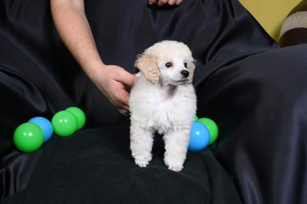 Toy male white