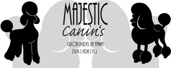 Majestic Canin's